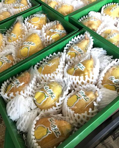 【農園便り】洋梨(ル・レクチェ)ギフトセット 販売中です!